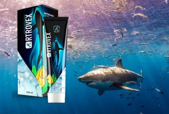 sea, shark