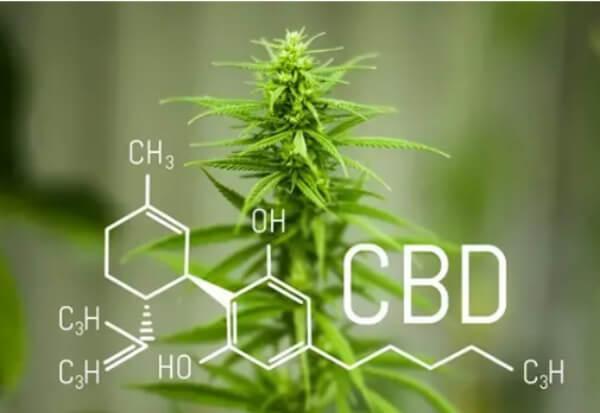 Ingredients, cbd oil