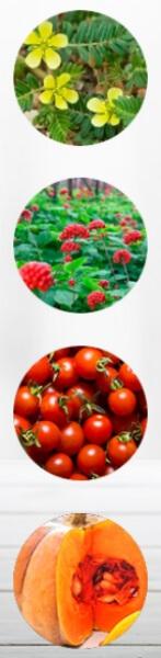 Ingredients Tribulus Terrestris & Ginseng